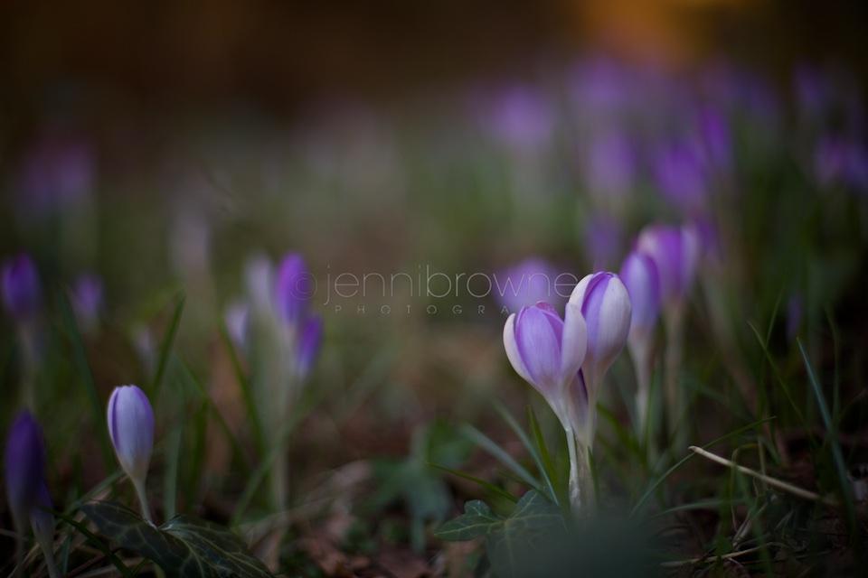 my garden _ 1