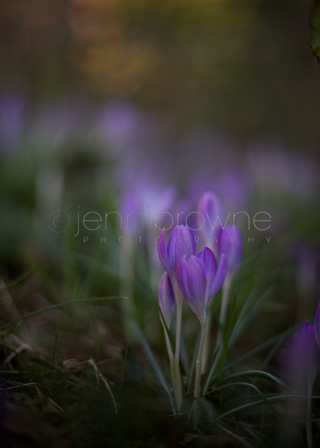 my garden _ 2
