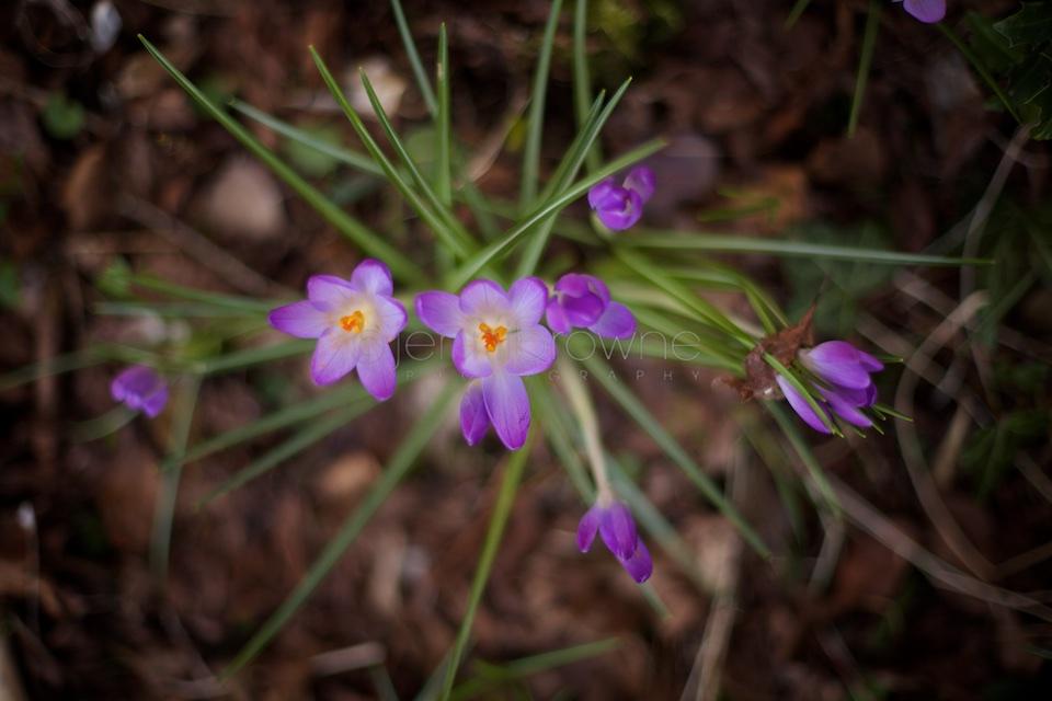 my garden _ 3