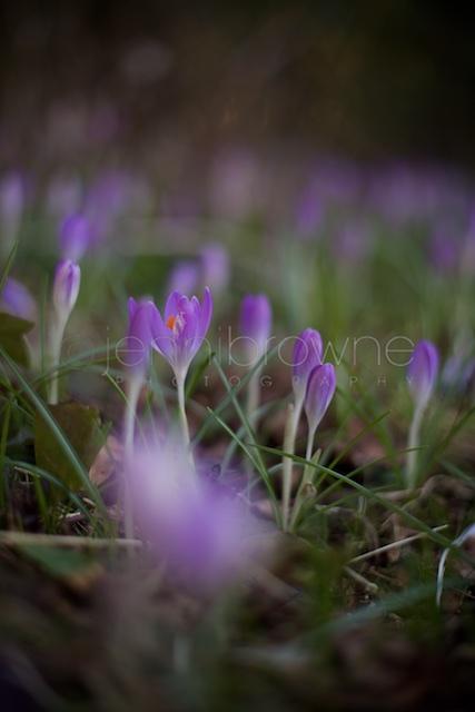 my garden _ 4