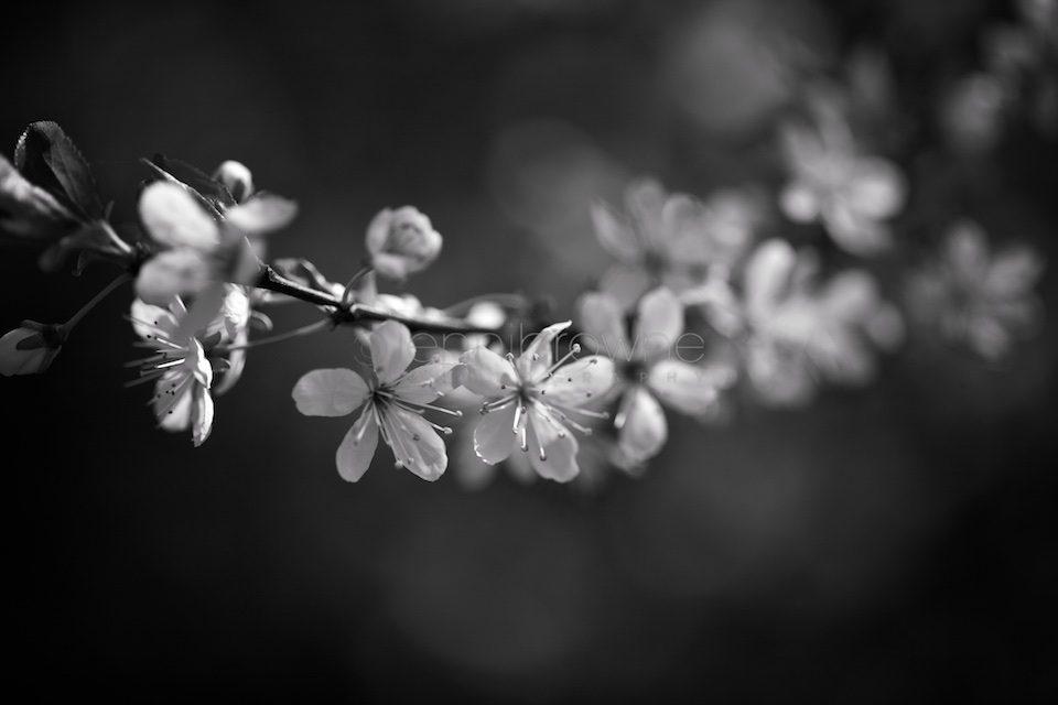 my-garden-_-8-960x640.jpg